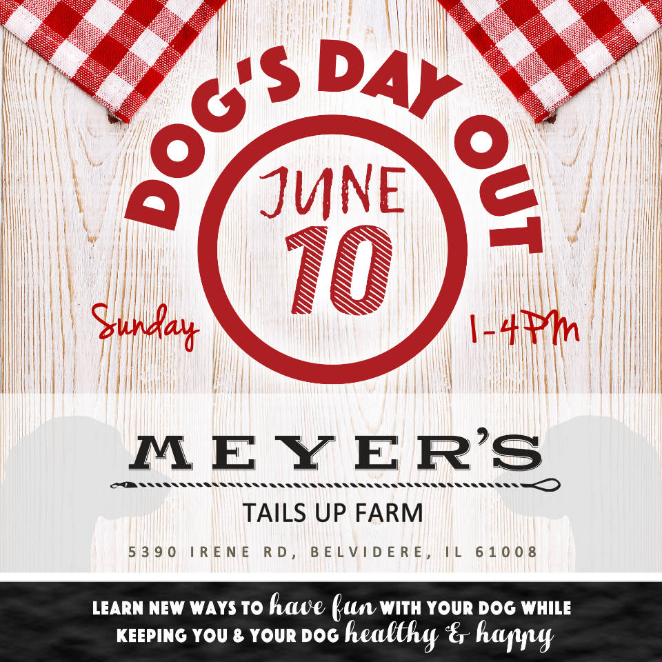 Dog's Day Out at Meyer's Tails Up Farm